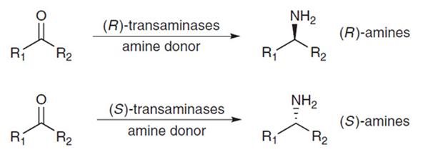 蛋白酶在食品中的应用