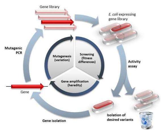 生物酶法与碱处理加工方式的区别?